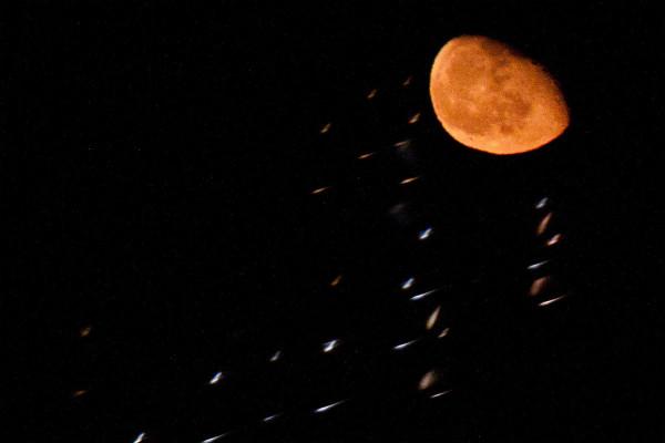 photography_moon_november_36