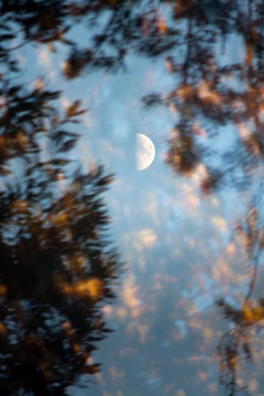 photography_moon_november_106